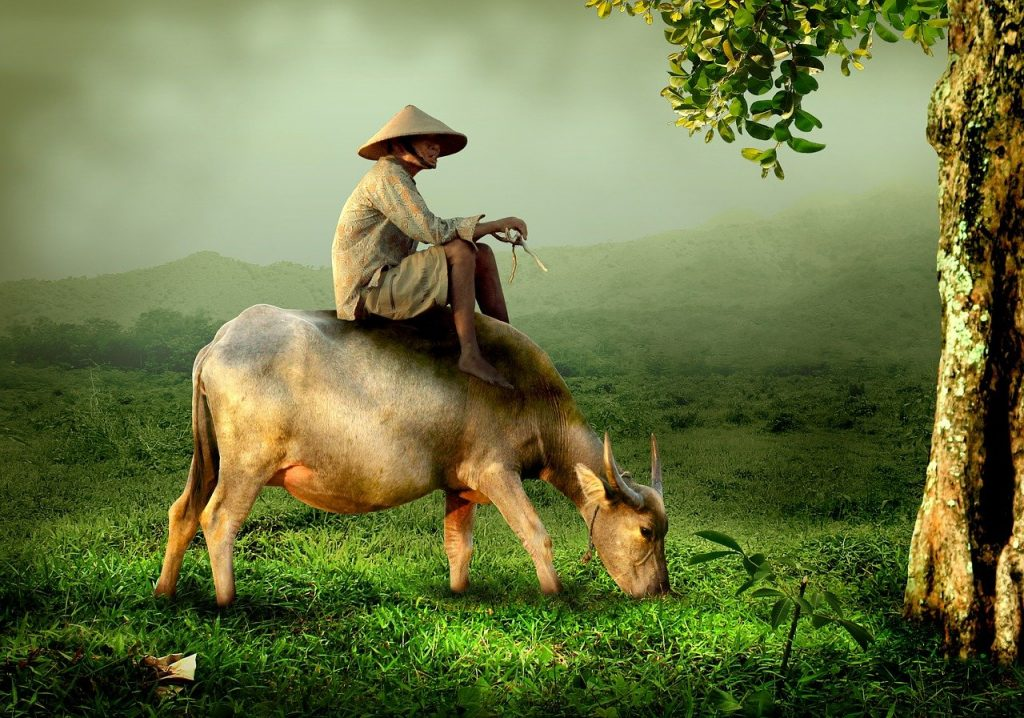 cow, riding, man